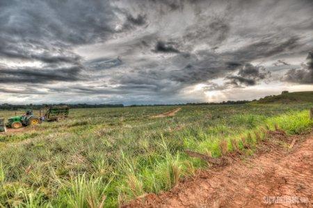 field Arenal Nationalpark Costa Rica Central America