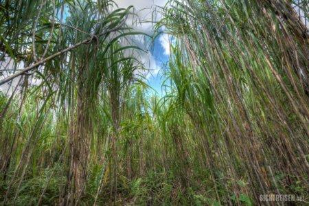 bamboo Arenal Vulcano Costa Rica Central America