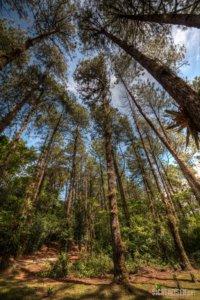 forrest Cerro Chato Vulcano Costa Rica Central America