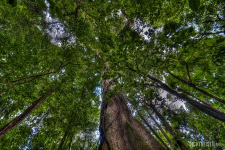 forrest Arenal Vulcano Nationalpark Costa Rica Central America