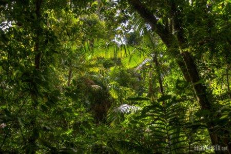 jungle Arenal Vulcano Nationalpark Costa Rica Central America